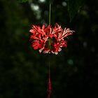 Hanging Flower by Simon R. Court