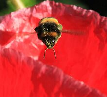 pollen covered bumble bee by mitch24