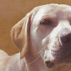 Labrador Love by artsandherbs