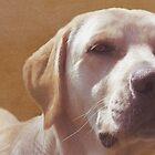 Labrador Love by artsandherbs