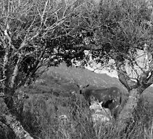 sheep framed in the arch of trees by morrbyte