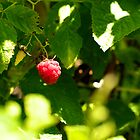Raspberry by lorenzoviolone