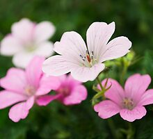 Splattered Pink by Paul-M-W