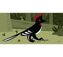 Anchiornis huxleyi Photographic Print