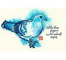 Little Blue Pigeon Photographic Print