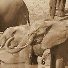 Sepia Mud Bath by Donald  Mavor