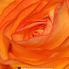 IPhone Case - Orange Rose - WITH LOGO by Graham Taylor