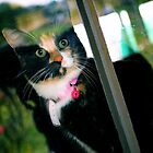 window kitty 2 by evvy84