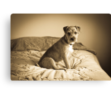 Mac the Dog Canvas Print