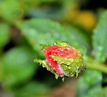 Ahhhh, Refreshing! by aprilann