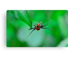 Amazing spider man Canvas Print
