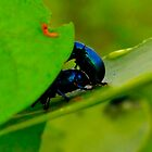 The bug mating... by Spacehunter