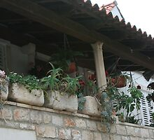 Patio Plants Dubrovnik, Croatia by Carol Singer