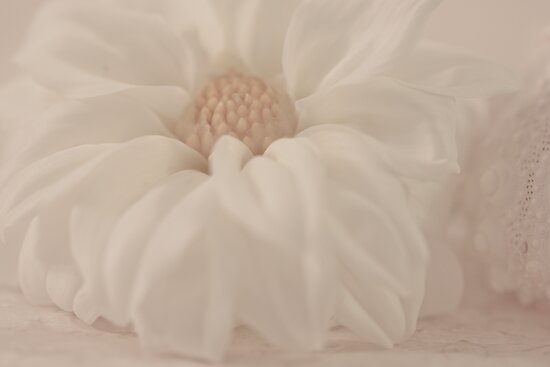 White Dahlia And Sea Shell by Sandra Foster