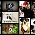 Images Of Arwen by Evita