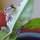 Hello Mr. Frog by Stacy Parker