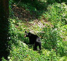 Backyard Bear by Kate Eller