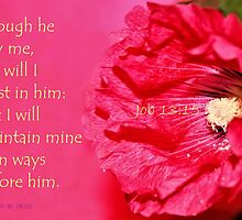 I Will Trust in Him by aprilann