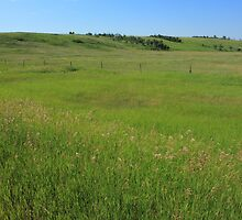 Green Alberta Prairie by Jim Sauchyn