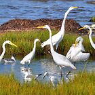 Wild Birds of Delmarva Calender  by Monte Morton