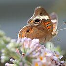 beautyfly by katpartridge