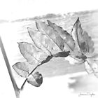 Black Leaf by Jessica Dryden