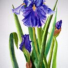 "'Iris, Spring Beauty"" by Mae Pilon"