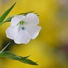 Flax by relayer51