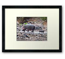 New born hippo Framed Print