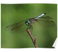 Dragonfly Summer ~ Poster