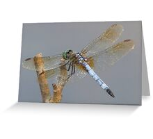 Little Green Dragonfly Greeting Card