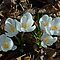Gang of Six - April Snow Drops by Barry Doherty