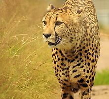 On The Prowl by JaymeeLS