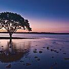 Lone Tree Brighton Park Brisbane Australia by PhotoJoJo