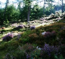 Colourful Heather - Woodland Walk - Glendalough by Marilyn Harris