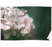 Textured Pink Hydrangea Poster
