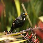young tui by joergilmaz