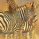 Common or Plains Zebra (Equus burchelli) by Terry Bailey