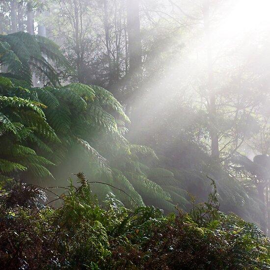 Black Range Forest by iPostnikov