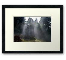 Black Range Forest Framed Print