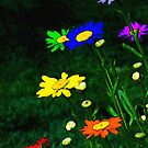 Rainbow Daisies by Sharon Woerner