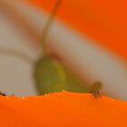 Grasshopper by Ashley  Langtry