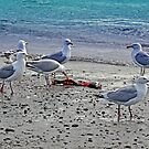 Seagulls Play by purplesensation
