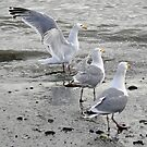 Seamless Seagulls by purplesensation