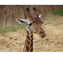 """""""Girrafe""""  by Carter L. Shepard Photographic Print"""