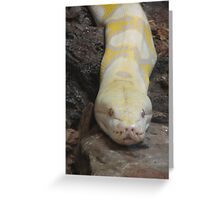 """""""White Boaconstrictor""""  by Carter L. Shepard Greeting Card"""