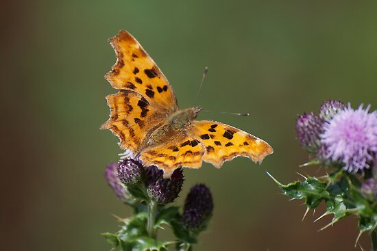 Comma by Gill Langridge