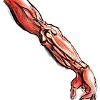 Arm Anatomy by EpicGorilla