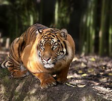 Big Paws, Sharp Claws by Graham Jones