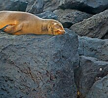 Sea Lion8 by bulljup